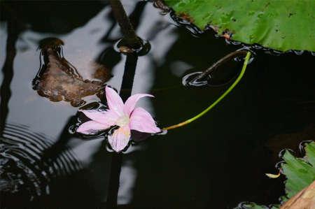distinct: Flower in water