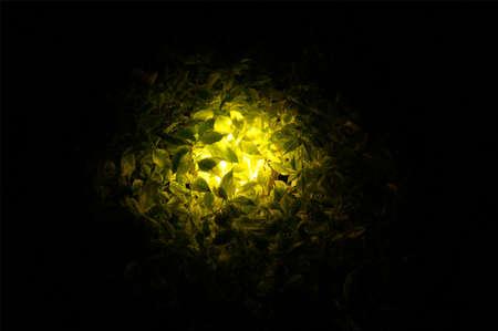 penetrate: light penetrate through leaves