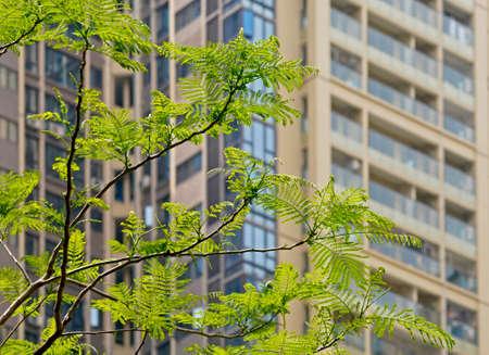 Real estate greening