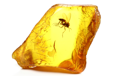 Baltic Amber with a fungus gnat Mycetophilidae isolated on white background Banco de Imagens