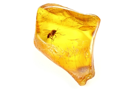 gnat: Baltic Amber with a fungus gnat Mycetophilidae isolated on white background Stock Photo