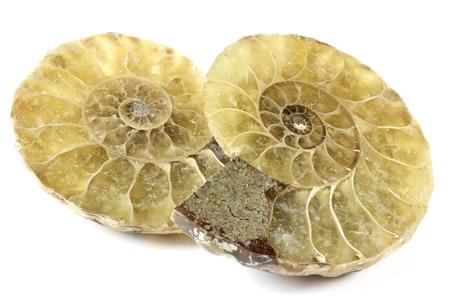 paleontologist: Half Cut ammonite isolated on white background