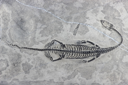 tethys: Keichousaurus hui found in Xingyi Guizhou China