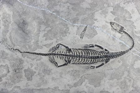 tethys: Keichousaurus hui found in Xingyi Guizhou China