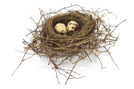 birds on branch: bird nest with two eggs isolated on white background Stock Photo