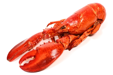 cooked lobster on white background