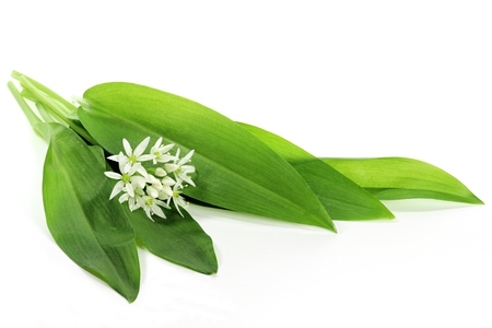 ramson isolated on white background Banque d'images