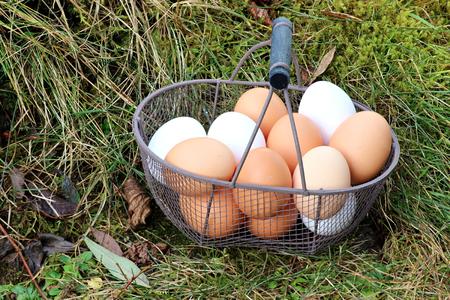 basketful: eggs in a basket Stock Photo