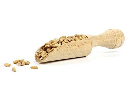 spelt: scoop with Spelt grains Stock Photo