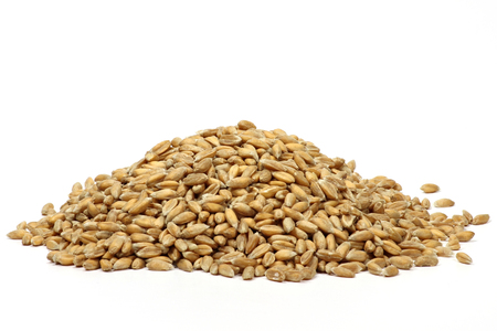 Spelt grains isolated on white background Фото со стока