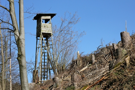 the edge: deerstand at forest edge