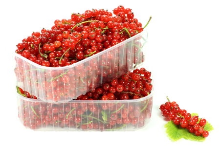 mellowness: red currants isolated on white background