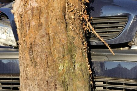 fully comprehensive: car hit a tree Stock Photo