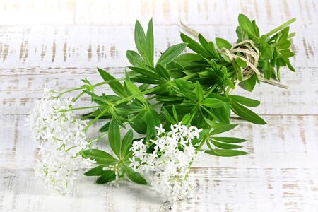 herbary: bunch of woodruff on wooden background Stock Photo