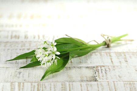 herbary: bunch of ramson on wooden background