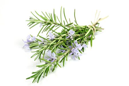herbary: bunch of rosemary isolated on white background Stock Photo