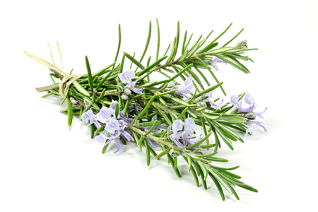 bunch of rosemary isolated on white background Standard-Bild