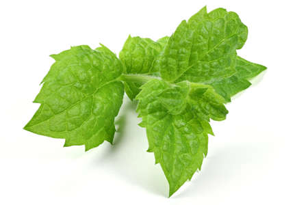 herbary: peppermint isolated on white background