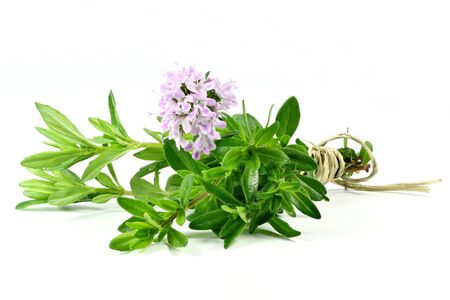 herbary: bunch of thyme isolated on white background