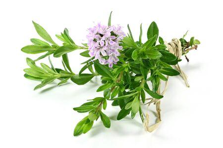 Bouquet de thym isolé sur fond blanc Banque d'images - 57834950