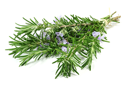 bunch of rosemary isolated on white background Stok Fotoğraf