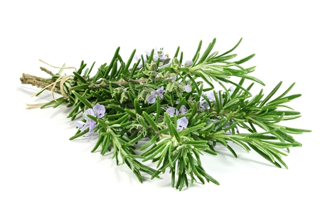 bunch of rosemary isolated on white background Фото со стока