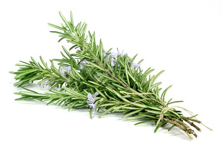 bunch of rosemary isolated on white background Stock Photo