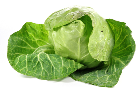 mellowness: white cabbage from organic farming isolated on white background Stock Photo