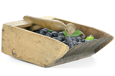 mellowness: freshly harvested blueberries in an old blueberry rake isolated on white background