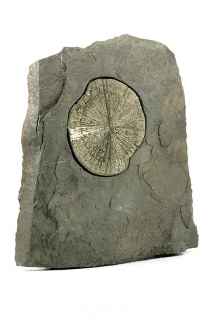 pyrite: pyrite sun in anthracite coal shale matrix found in Illinois