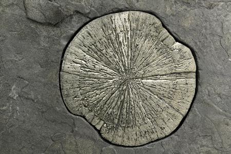 mineralogy: pyrite sun in anthracite coal shale matrix found in Illinois
