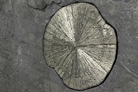 sulfide: pyrite sun in anthracite coal shale matrix found in Illinois