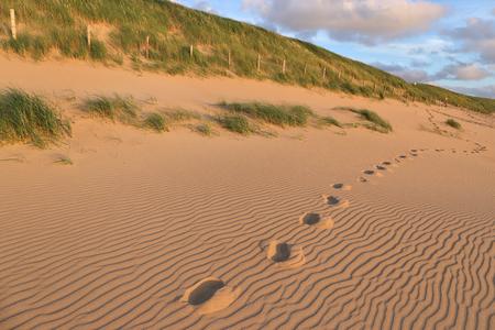 duinen aan de Nederlandse Noordzeekust