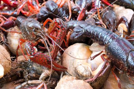 fishmonger: river crayfish at fishmonger
