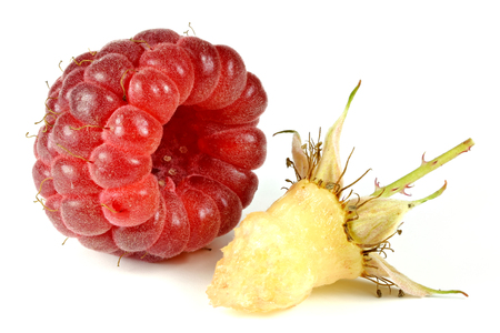 mellowness: fresh picked raspberry isolated on white background