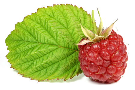 fresh picked raspberry isolated on white background