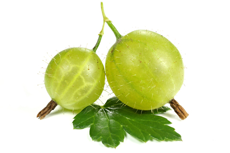 fresh picked gooseberries isolated on white background