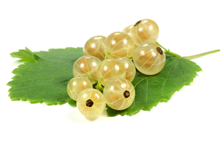 white currants isolated on white background