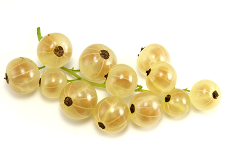 mellowness: white currants isolated on white background