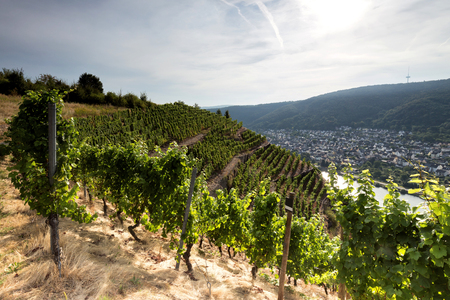 mellowness: landscape of Moselle vineyards Stock Photo