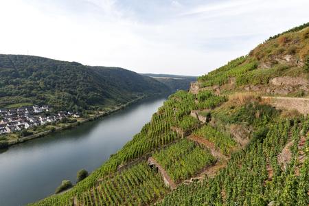 landscape of Moselle vineyards Stock Photo