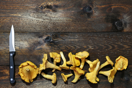girolle: chanterelles on wooden boards for background use