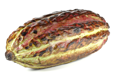 fairtrade: cacao fruit isolated on white background