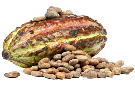 cacao fruit with roasted cacao beans isolated on white background