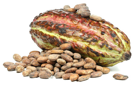 fairtrade: cacao fruit with roasted cacao beans isolated on white background