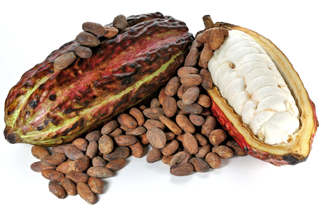 fairtrade: cacao fruits with roasted cacao beans isolated on white background