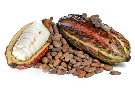 cacao fruits with roasted cacao beans isolated on white background