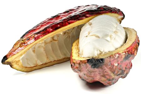 commodities: fruto del cacao aislada en el fondo blanco