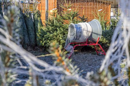 Christmas trees on sale at German Christmas market