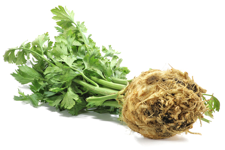 apium graveolens: celeriac isolated on white background